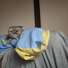 ペット同好会/ねこ同好会/ねこ 起きたら向こう側からめっちゃ見られてた。…