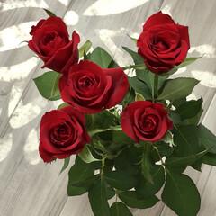 お買得/生花/バラ 8月はバラがお買得なんだそうです。  ド…