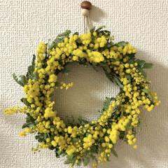 初リース/リース/春/ミモザ/ハンドメイド/100均/... 綺麗に咲いてるミモザが次のお休みまで綺麗…