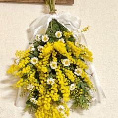 花かんざし/春/スワッグ/ミモザ/小さい春 新たに咲いてきたミモザで、2つめのスワッ…