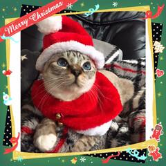100均サンタ帽子でリメイクサンタコス/猫/クリスマス/100均/ダイソー サンタコスにゃん🎅🎄✳🌟✨(1枚目)