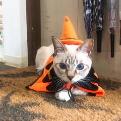 ハロウィン 猫雑貨のお店にて