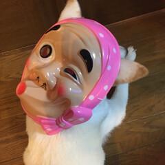 おめん/ひょっとこ/花火大会/紀州犬琥珀ちゃん/ペット おはようございます😊昨夜は花火大会✨🎆🎇…