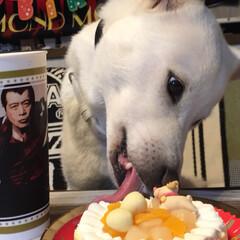 しろいぬ/誕生日の花かんむり/元気でいてね/ワンコケーキ美味しい/7歳お誕生日おめでとう/紀州犬/... 9月22日🎂紀州犬琥珀ちゃんの7歳のお誕…(2枚目)