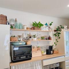 食器棚/ポトス/棚/キッチン/キャンドゥ/ニトリ/... 食器棚上のポトス🍀が伸びてきたので、レン…(1枚目)