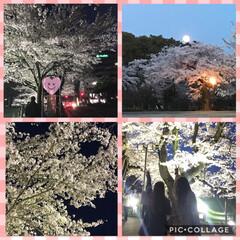 ビール/焼き鳥/居酒屋/夜桜/桜 今夜も夜桜🌸  今日ゎ花よりダンゴ🍻笑