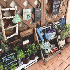 アイビー/手作りプレート/ベランダガーデン/グリーン/観葉植物のある暮らし/フォロー大歓迎/... 『わたしのお気に入り』 イベント参加✨ …