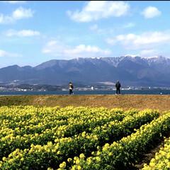 ある日の風景/琵琶湖/雪山とコラボ/菜の花畑/LIMIAおでかけ部/フォロー大歓迎/... 毎年観に行く風景のひとつ。 早春のまだ寒…