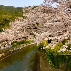 懐かしの場所/菜の花/桜/LIMIAおでかけ部/フォロー大歓迎/わたしのごはん/... 昨日のお出かけ続きです。 桜並木と菜の花…
