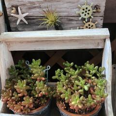 手作りプレート/ベランダガーデン/多肉植物/グリーン/令和の一枚/フォロー大歓迎/... 今日は真夏日近く 気温が高くなるそうです…