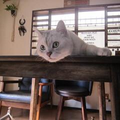 ぺット/猫/おはよう ʕ๑•ω•ฅʔ*おはよっ❤byピッコロ