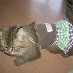 ペット/猫/服/ハンドメイド Tシャツリメイク=^ェ^=