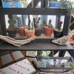 サボテン/簡易温室/DIY 冬のボンちゃんハウスをDIY(◍´ꇴ`◍…