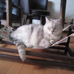 猫/暑さ どこでもドアを封鎖されたにゃ(=>ω<=…