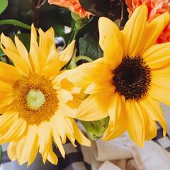 ひまわり/花 頂いたお花、 同じ向日葵だと思ったら、中…