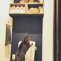 アクセントクロス/ビンテージマンション/ペット/猫/インテリア/トイレ/... 流れている水が 大好きみたい( *´艸`…(1枚目)