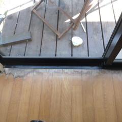 ホームインスペクション/インスペクション/住宅診断/検査/LDK 【室内の調査風景】床に、水染みの跡や傷跡…