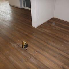 ホームインスペクション/インスペクション/住宅診断/検査/LDK オートレーザーを使用し、床の傾斜を測定し…