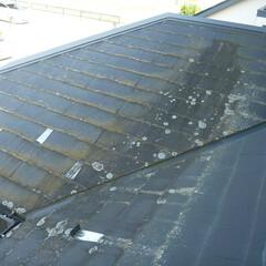ホームインスペクション/インスペクション/住宅診断/検査/屋根 屋根表面に劣化や、付着物が見られます。