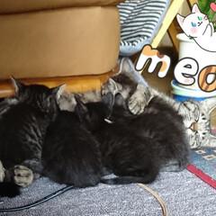 子育て/子猫/ペット/ペット仲間募集/猫/にゃんこ同好会 はなちゃんママ💠 この時期は大変そうでし…