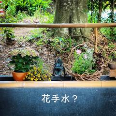花手水/トトロ/星宮神社/下野市 下野市の星宮神社  こちらの花手水は………(1枚目)
