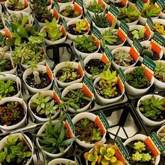 土いじり/TOTOリモデルクラブ/イベント/多肉植物寄せ植え/多肉植物 多肉植物の寄せ植え プクプクしてかわいい…