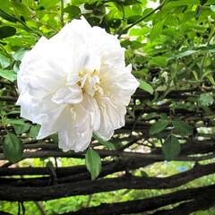 阿部興業株式会社/栃木県/平屋/木の家/ニゲラ/バラ/... 緑と花に囲まれた家  以前訪れたお客様の…(3枚目)
