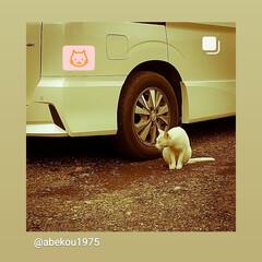 宇都宮市/栃木県/警戒/行動/ねこ/ネコ ネコちゃんの行動は、面白いですね🎵