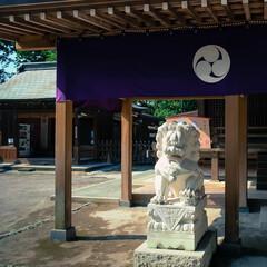 神社/佐野市/ネコ/狛犬/唐澤山神社 唐澤山神社 狛犬がお守りしているので、ネ…