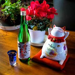 秋田県/シクラメン/雪の茅舎/招き猫/あけましておめでとうございます/新年 あけましておめでとうございます🤗 良い一…