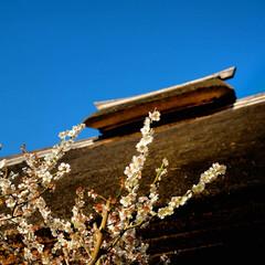 平穏/茅葺き屋根/益子焼/濱田庄司/古民家/益子町 ちょっと前の穏やかな日 早く平穏な日常が…