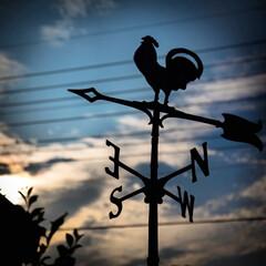 虫の音/ふくろう/風見鶏/秋の空/やっぱり木が好き すっかり秋の空に 虫の音が聞こえてきます…(2枚目)