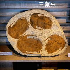 ピアノコンサート/三葉虫/アンモナイト/石の美術館/隈研吾/芦野石/... 石の美術館 ピアノコンサートも開かれるそ…(6枚目)