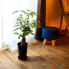 サイエンスホーム/阿部興業株式会社/サンセベリア/パキラ/ベンジャミン/木の家づくり/... 家の中に緑があると、空間にメリハリができ…(3枚目)