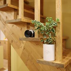 サイエンスホーム/阿部興業株式会社/サンセベリア/パキラ/ベンジャミン/木の家づくり/... 家の中に緑があると、空間にメリハリができ…(4枚目)