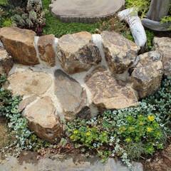 石組み/ナチュラルガーデン/セダム/お庭/ガーデン/エクステリア/... ナチュラルで可愛いお庭を演出するなら石組…