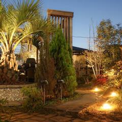 ライティング/照明/お庭/ガーデン/エクステリア/ヤシ/... 展示場のライティング