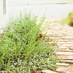 レンガ/アンティーク/アプローチ/お庭/エクステリア/ガーデン/... お花を植えるのが楽しくなるレンガのアプロ…