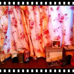 インテリア/お部屋/窓辺/薔薇柄/手芸屋さん/手縫い/... pinkの薔薇柄のカーテンは手作りです〜…