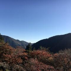 温泉/紅葉/箱根 従姉妹より。  箱根だそうです  紅葉の…(1枚目)