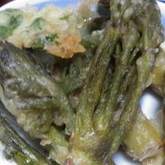 山菜/令和の一枚/はじめてフォト投稿/おうちごはんクラブ/風景/暮らし/... コシアブラとタラの芽の天ぷら⸜❤︎⸝ …