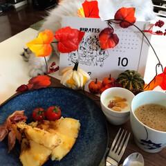 りんご/朝ごはん/にゃんこ日めくり/にゃんこ同好会 おはようございます😃 今朝はわりと暖かく…(3枚目)