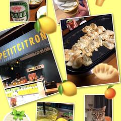 キジトラ女子/餃子祭り/夕ごはん/レモネード専門店ペティットシトロン おばんです☺️ 仕事が早く終わったので、…