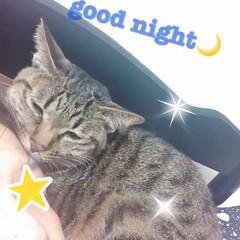おやすみなさい/にゃんこ同好会 皆さま良い夢を🌙 明日も良い日であります…