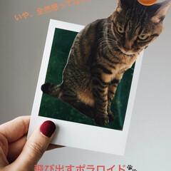 スープカレー吉田商店/スープカレー/キジトラ女子/にゃんこ同好会/おでかけ 義父母にさそ誘われ、お昼ごはんは行きつけ…(3枚目)