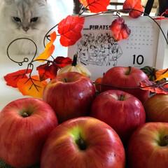 りんご/朝ごはん/にゃんこ日めくり/にゃんこ同好会 おはようございます😃 今朝はわりと暖かく…(2枚目)