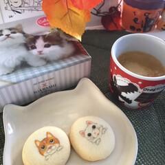 にゃんこクッキー/にゃんこ同好会/今日のおやつ こんにちは😃 仕事から帰って、ほっと一息…