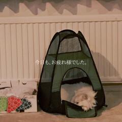おやすみなさい/にゃんこ同好会/チンチラシルバー/猫 おばんです〜☺️ 今日も忙しい日でした〜…