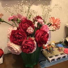 お庭/バラ/薔薇/玄関あるある 今年もバラが庭に咲きました。ちょっと、去…(5枚目)