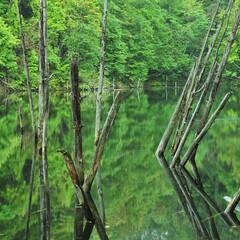月光池/湖/水没林 水際のトッカータ  幌内・月光池・次郎湖…